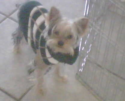 Angus_in_sweater